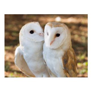 2人のフクロウの友人 ポストカード