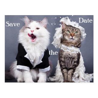 2匹のかわいい猫 ポストカード