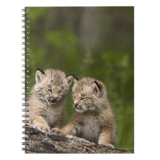2匹のカナダオオヤマネコ(オオヤマネコCanadensis)の子ネコ ノートブック