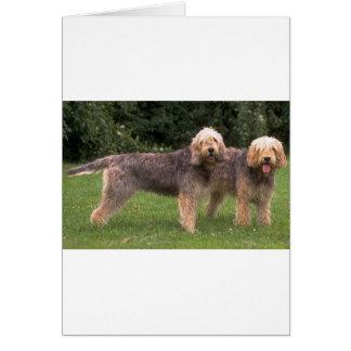 2匹のカワウソ猟犬full.png カード
