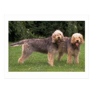 2匹のカワウソ猟犬full.png ポストカード