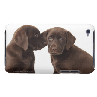 2匹のチョコレートラブラドル・レトリーバー犬の子犬 Case-Mate iPod TOUCH ケース