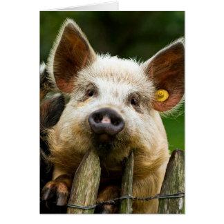 2匹のブタ-養豚場-ポーク農場 カード