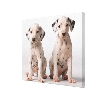 2匹の小さい白黒Dalmatian子犬 キャンバスプリント