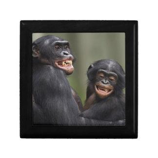 2匹の微笑のピグミーチンパンジー スクエアギフトボックス小