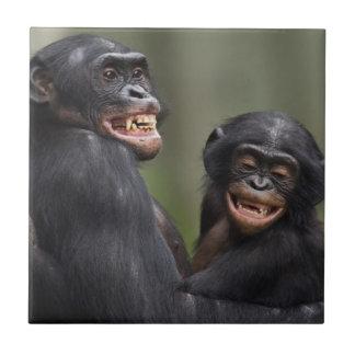 2匹の微笑のピグミーチンパンジー タイル