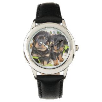 2匹の有害なロットワイラーの子犬 腕時計