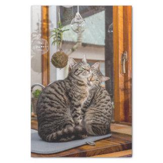 2匹の猫のイメージのティッシュペーパー 薄葉紙