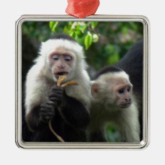 2匹の白い顔のCapuchin猿 メタルオーナメント