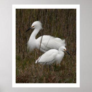 2匹の白鷺の鳥の野性生物動物のプリント ポスター