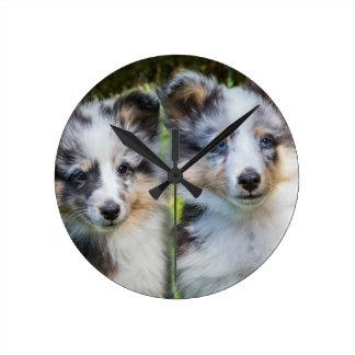 2匹の若いシェットランド・シープドッグ犬のポートレート ラウンド壁時計