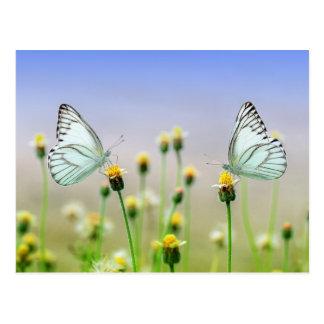 2匹の蝶、2つの花 ポストカード