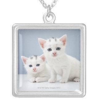 2匹の非常に若く白い子ネコは好奇心をもって凝視します シルバープレートネックレス