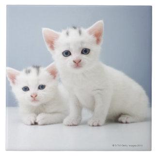 2匹の非常に若く白い子ネコは好奇心をもって凝視します タイル