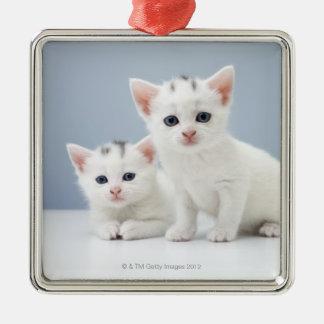 2匹の非常に若く白い子ネコは好奇心をもって凝視します メタルオーナメント