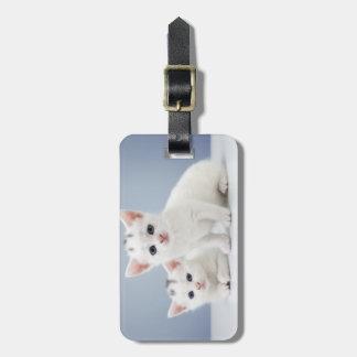 2匹の非常に若く白い子ネコは好奇心をもって凝視します ラゲッジタグ