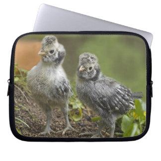 2羽のポーランドの鶏- ラップトップスリーブ