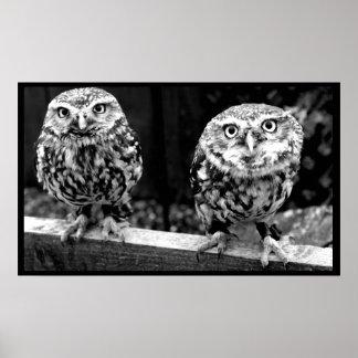 2羽の小さいフクロウの白黒キャンバスポスター ポスター