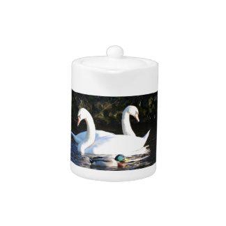 2羽の白鳥およびアヒル