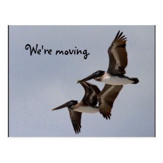 2羽の飛んでいるなペリカン ポストカード