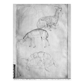 2頭のカメ、ヤギおよびヒツジ ポストカード