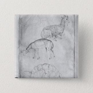 2頭のカメ、ヤギおよびヒツジ 5.1CM 正方形バッジ