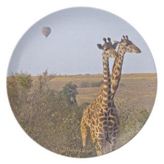 2頭のキリン(Giraffaのcamelopardalis)、マサイ語 プレート