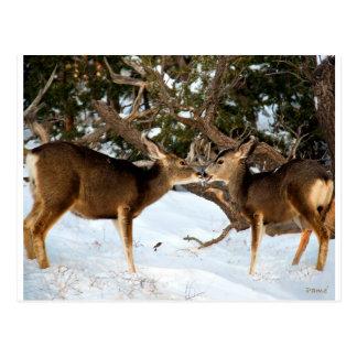2頭のシカの接吻 ポストカード