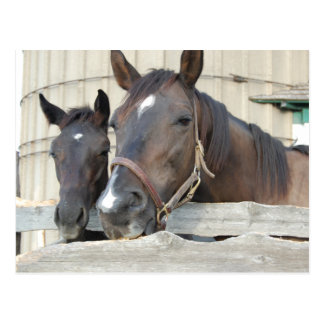 2頭の馬Chewin塀 ポストカード