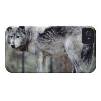 24114488 Case-Mate iPhone 4 ケース