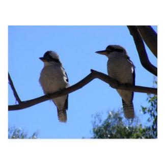 2 Kookaburra ポストカード
