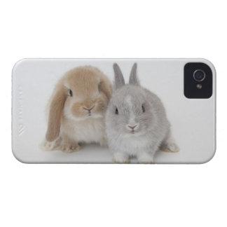 2 Netherlandの小びとおよびオランダLOPのバニー Case-Mate iPhone 4 ケース