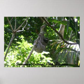 3つま先で触られた怠惰、Soberaniaの国立公園、パナマ ポスター