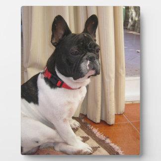 3フランスのなbulldog.pngの着席 フォトプラーク