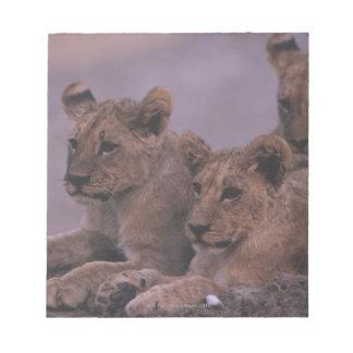 3ライオンの子 ノートパッド