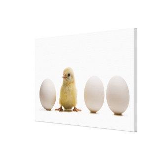 3個の卵を持つベビーのひよこのクローズアップ キャンバスプリント