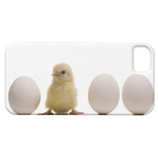 3個の卵を持つベビーのひよこのクローズアップ iPhone SE/5/5s ケース