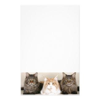 3匹のかわいい子ネコ 便箋