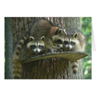 3匹のベビーのアライグマ カード
