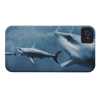 3匹のホホジロザメ(Carcharodonのcarcharias) Case-Mate iPhone 4 ケース