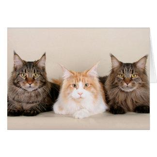 3匹のメインのあらいぐま猫 カード