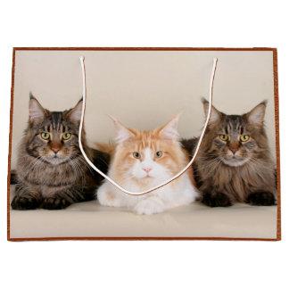 3匹のメインのあらいぐま猫 ラージペーパーバッグ