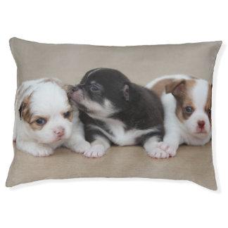 3匹の愛らしいチワワの小犬のベッド ペットベッド