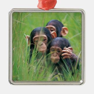 3匹の若いチンパンジー(鍋のtroglodytes) メタルオーナメント