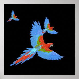 3匹の飛んでいるなコンゴウインコの手描きのポスター ポスター