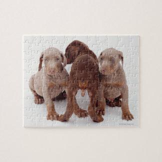 3匹の(犬)ドーベルマン・ピンシェルの子犬 ジグゾーパズル