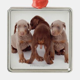 3匹の(犬)ドーベルマン・ピンシェルの子犬 メタルオーナメント