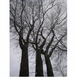 3本の木 写真彫刻(台付き)