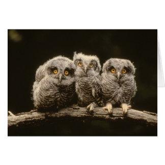 3羽のフクロウのひよこ カード