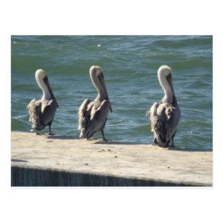 3羽のペリカン ポストカード